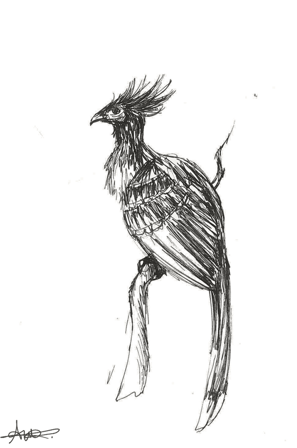 Tropical bird by Kiulani