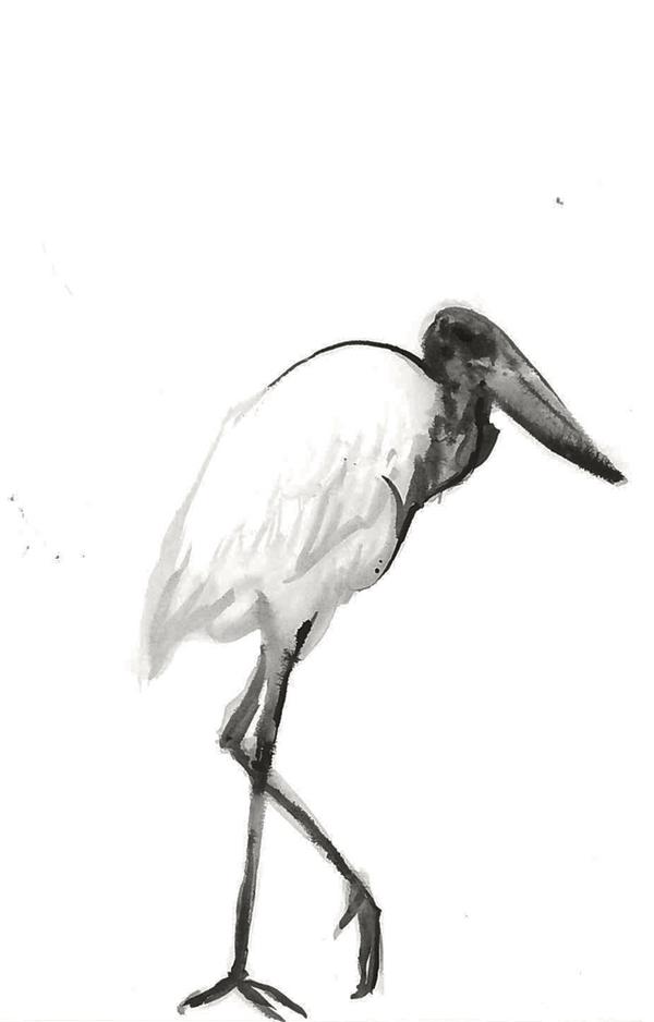 Ink Jabiru Stork by Kiulani