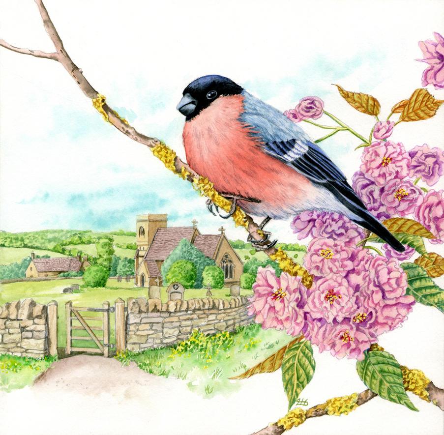 Bullfinch on cherry blossom 1of 4 by LynneHendersonArt
