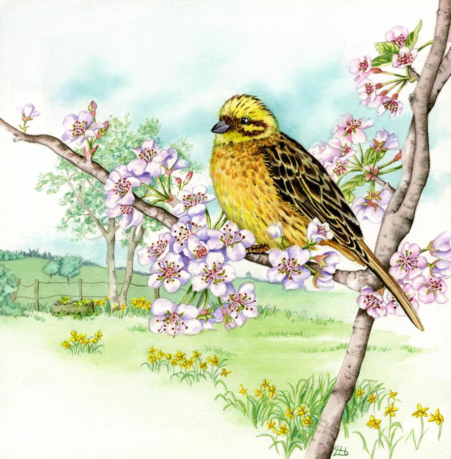 Yellowhammer on cherry blossom 3 of 4 by LynneHendersonArt