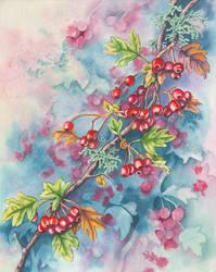 Hawthorn Berries by LynneHendersonArt
