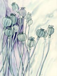 Opium Poppy by LynneHendersonArt