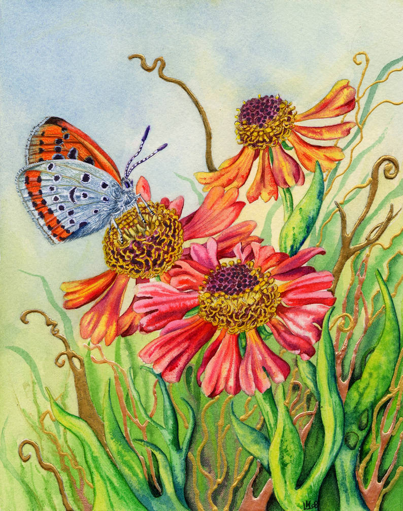 Helenium and Large Copper Butterfly by LynneHendersonArt