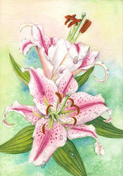 Oriental Lily by LynneHendersonArt