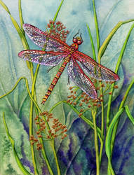 Dragonfly and Common Rushes