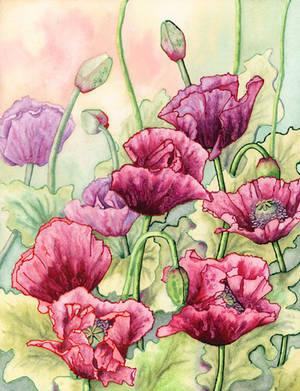 Opium Poppies by LynneHendersonArt
