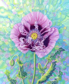 Poppy Millefiori, acrylic on canvas 50 by 60cm