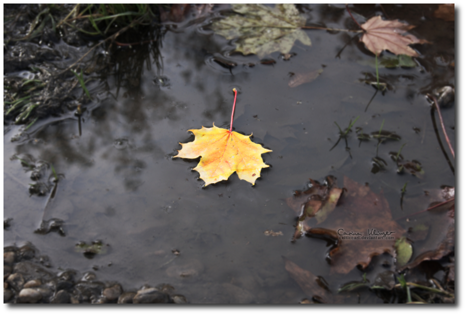 Autumn II by CelticCari