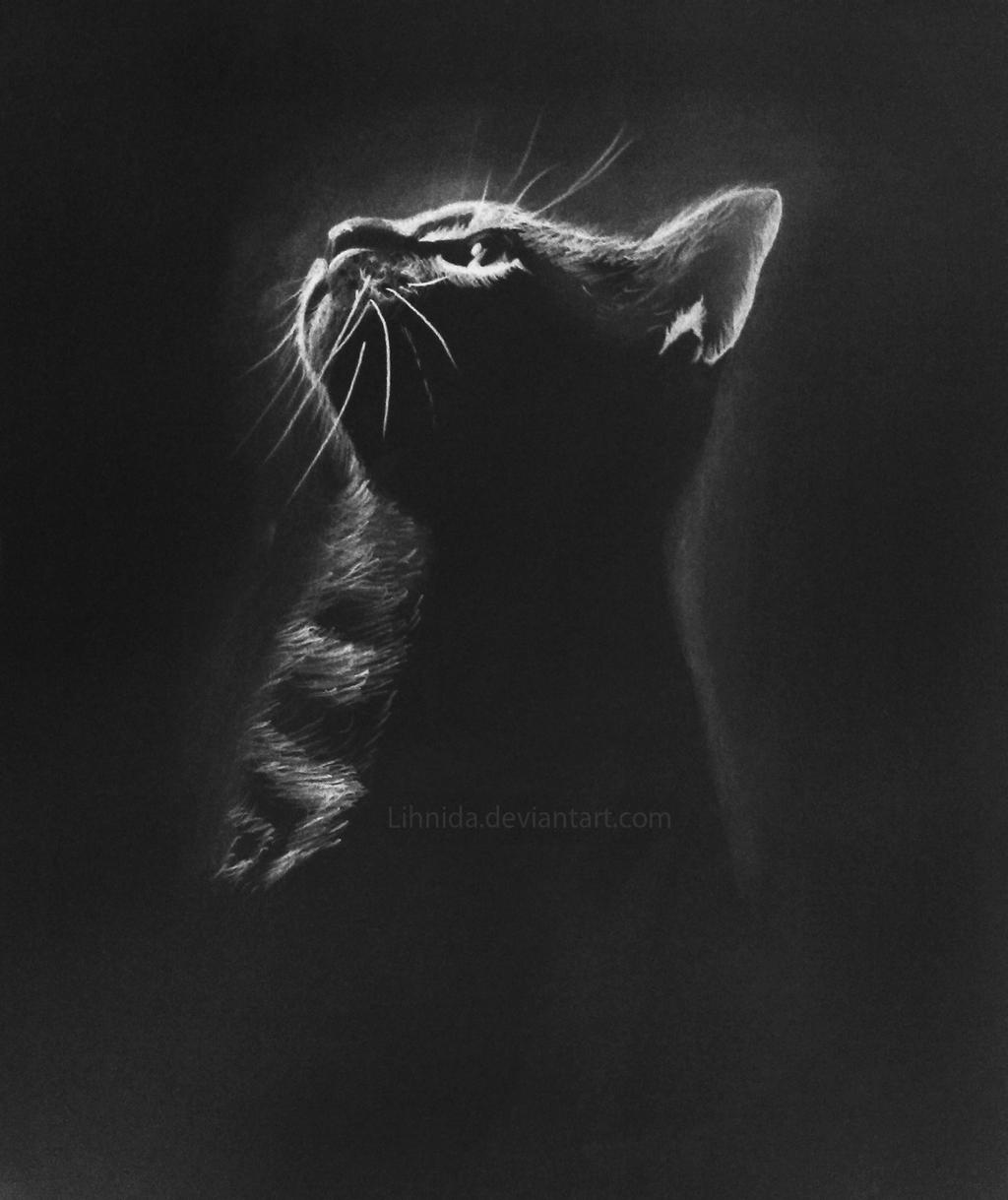Kitten - Inverted colors by lihnida