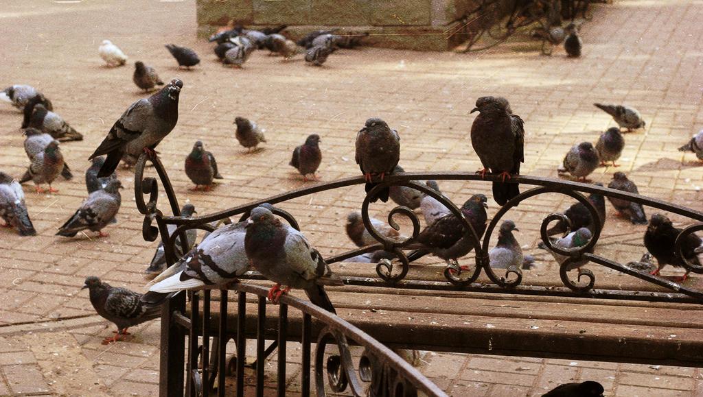 Birds by oleggirl