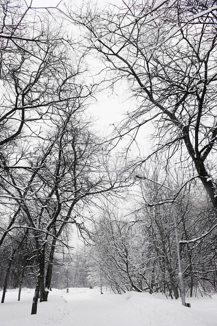 nature by oleggirl