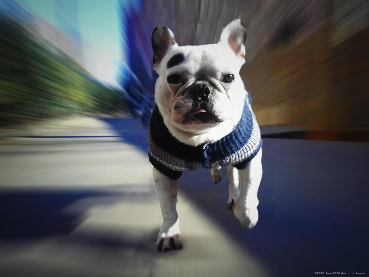 Run like the Bull 2