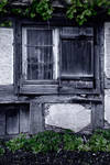 Window and Vine 2 by dbroglin