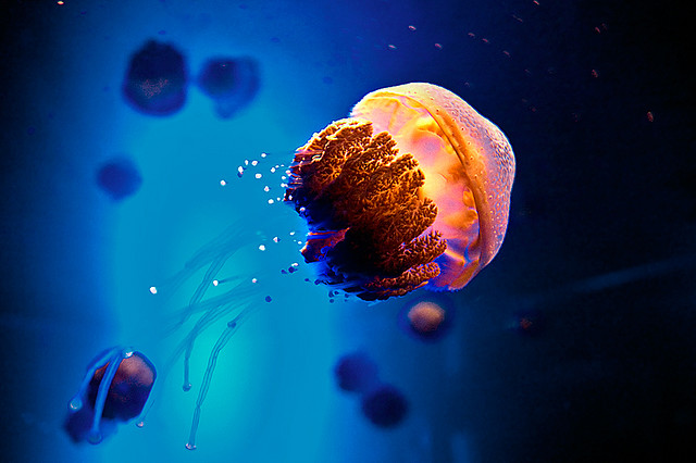 Illuminated Jellyfish by weaverglenn