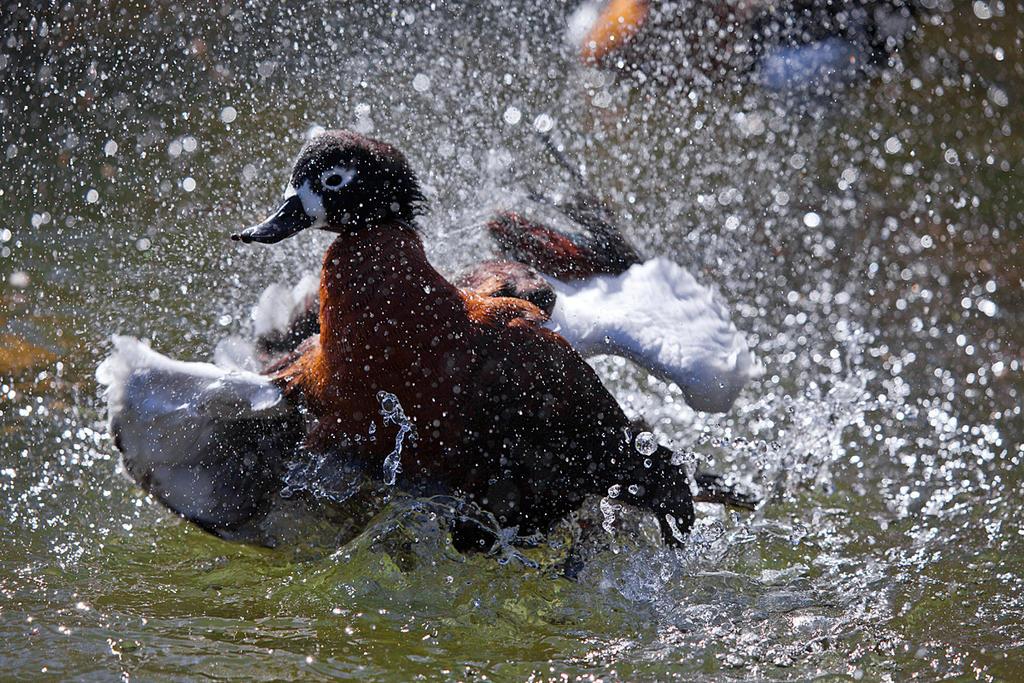 Splish Splash by weaverglenn