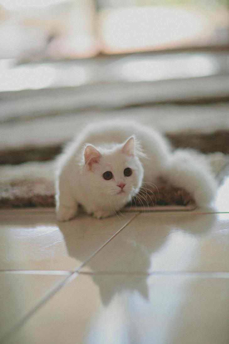 Wedding Kitten by weaverglenn