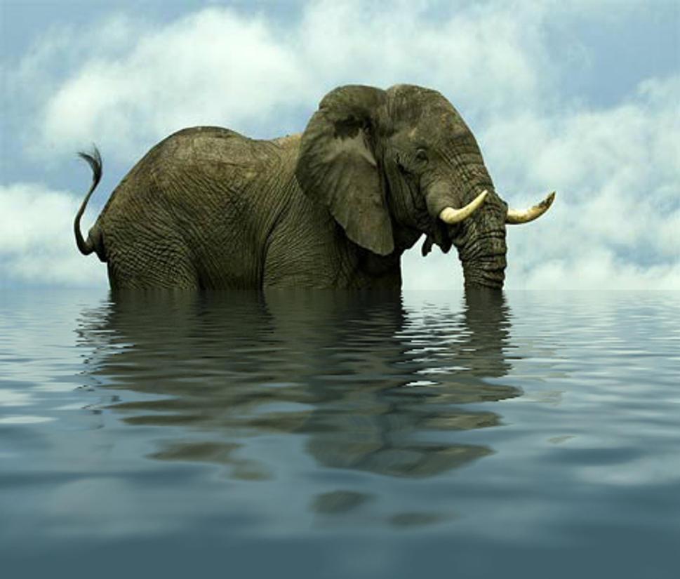 Elephant reflecting elephant by kaolincash
