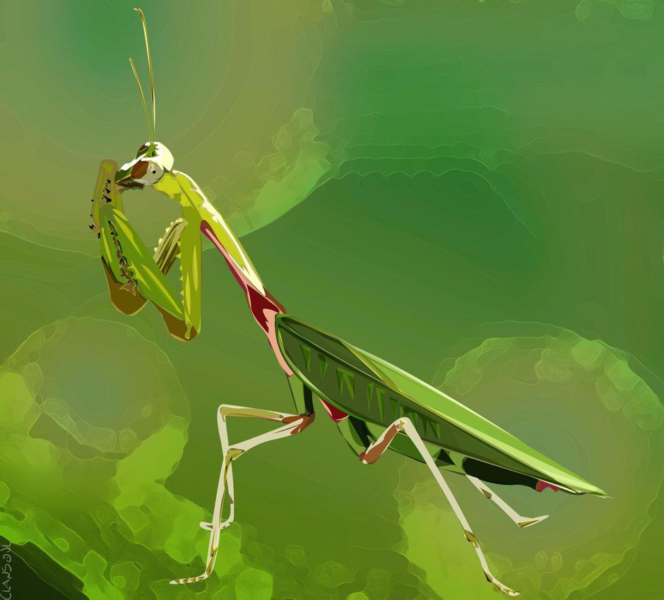 Praying Mantis by kaolincash