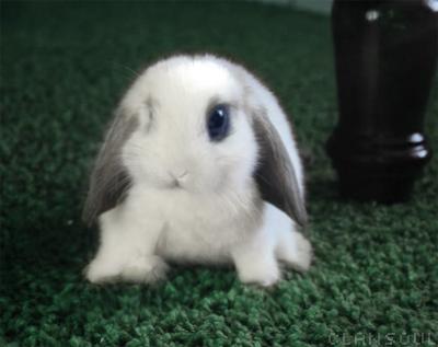 Rabbit by kaolincash