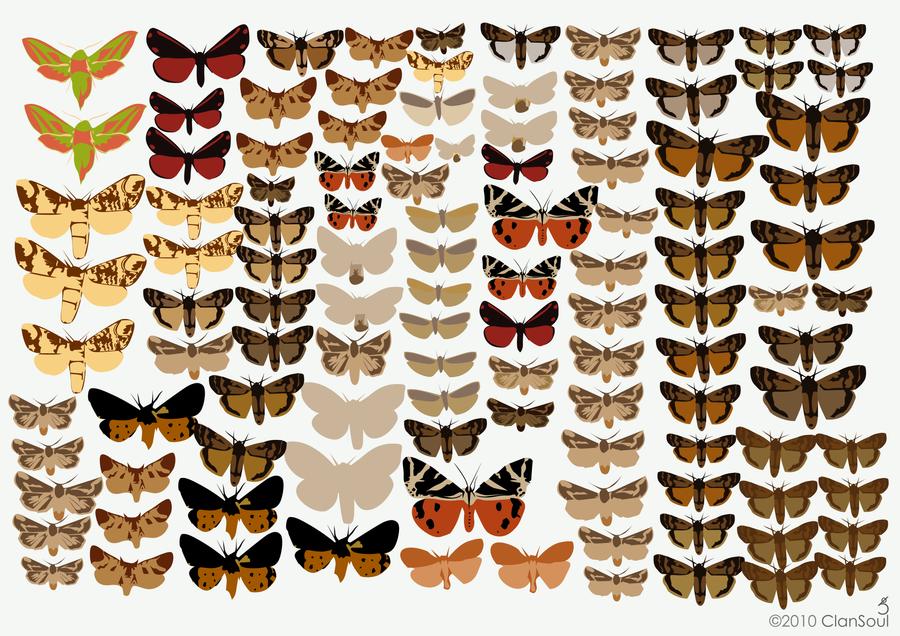 Wall of Moths by kaolincash