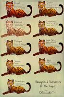 Tiger Subspecies by MischievousRaven