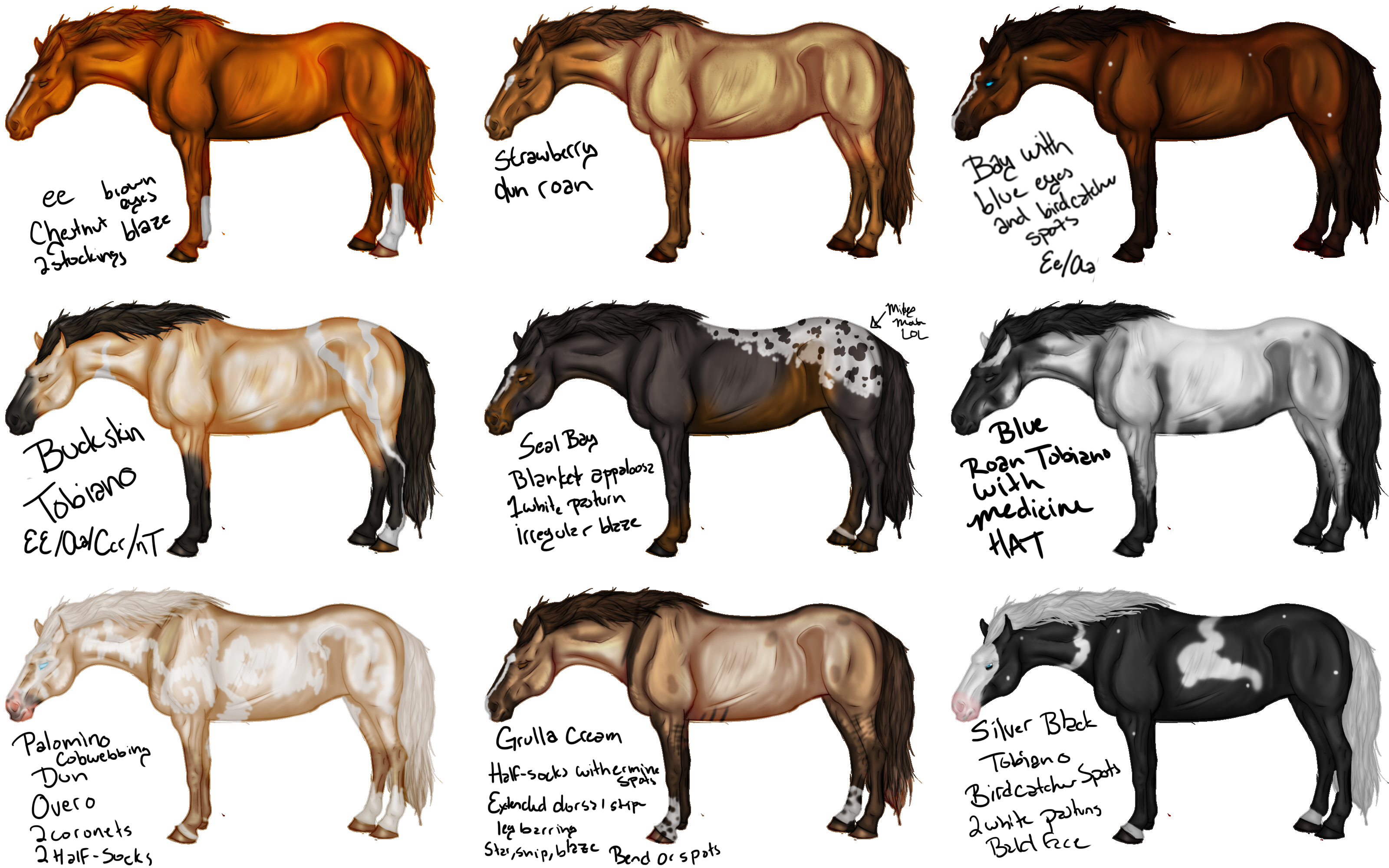 Horse Colors Bing Images