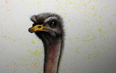 An Ostrich by ChainsawTeddybear