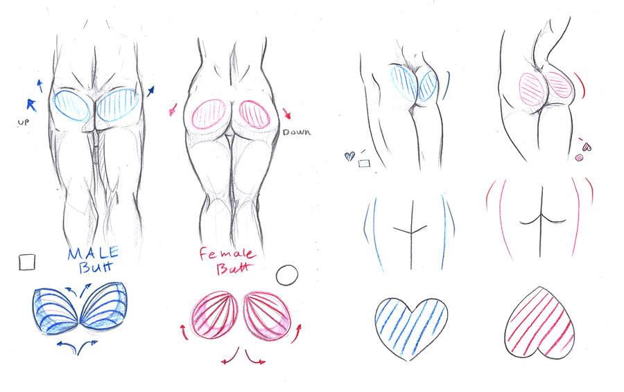 Butt Tutorial by ImoonArt on DeviantArt