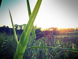 Reeds by possiblyneil