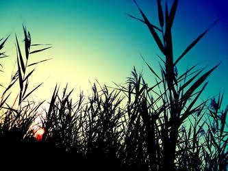 Shadow Reeds by possiblyneil