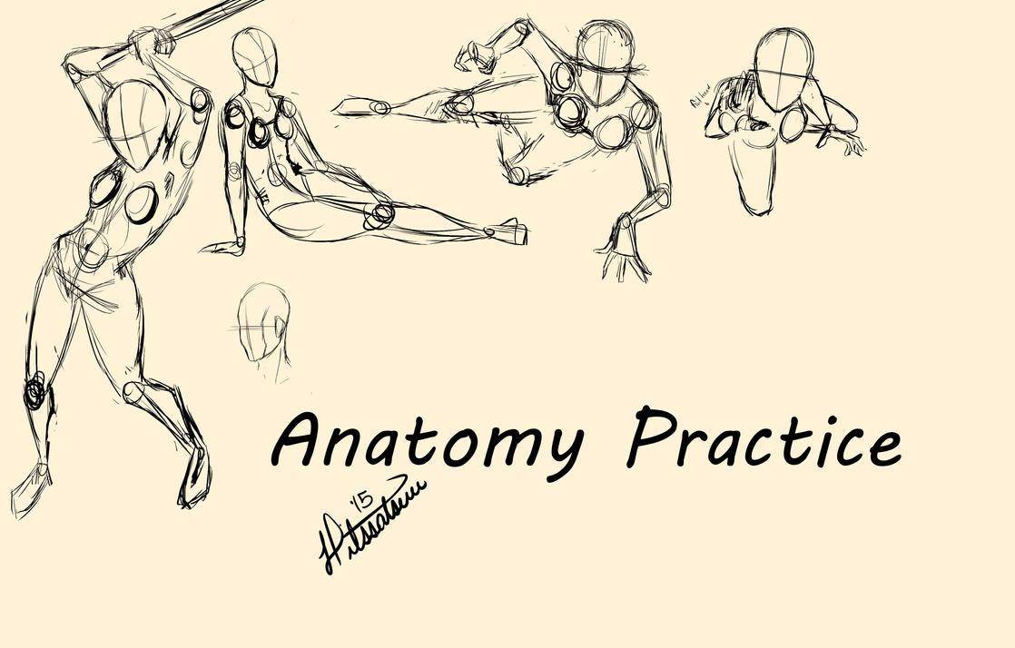 Anatomy Practical Test