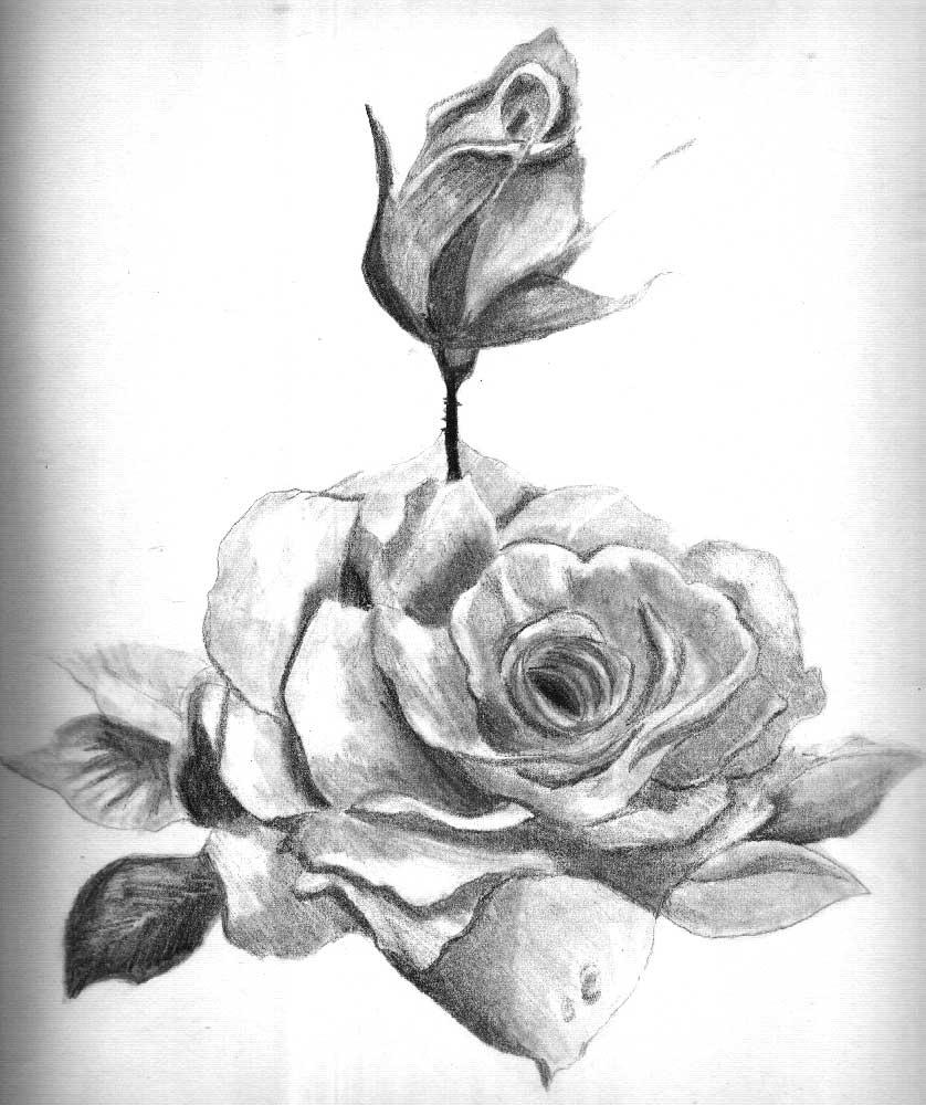 dongetrabi: Black And White Shaded Flower Drawing Images