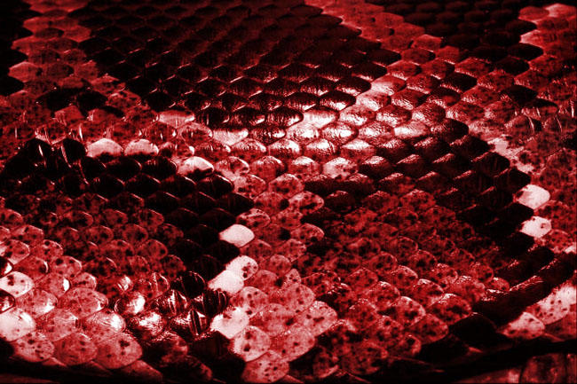 Red Snake Skin Wallpaper