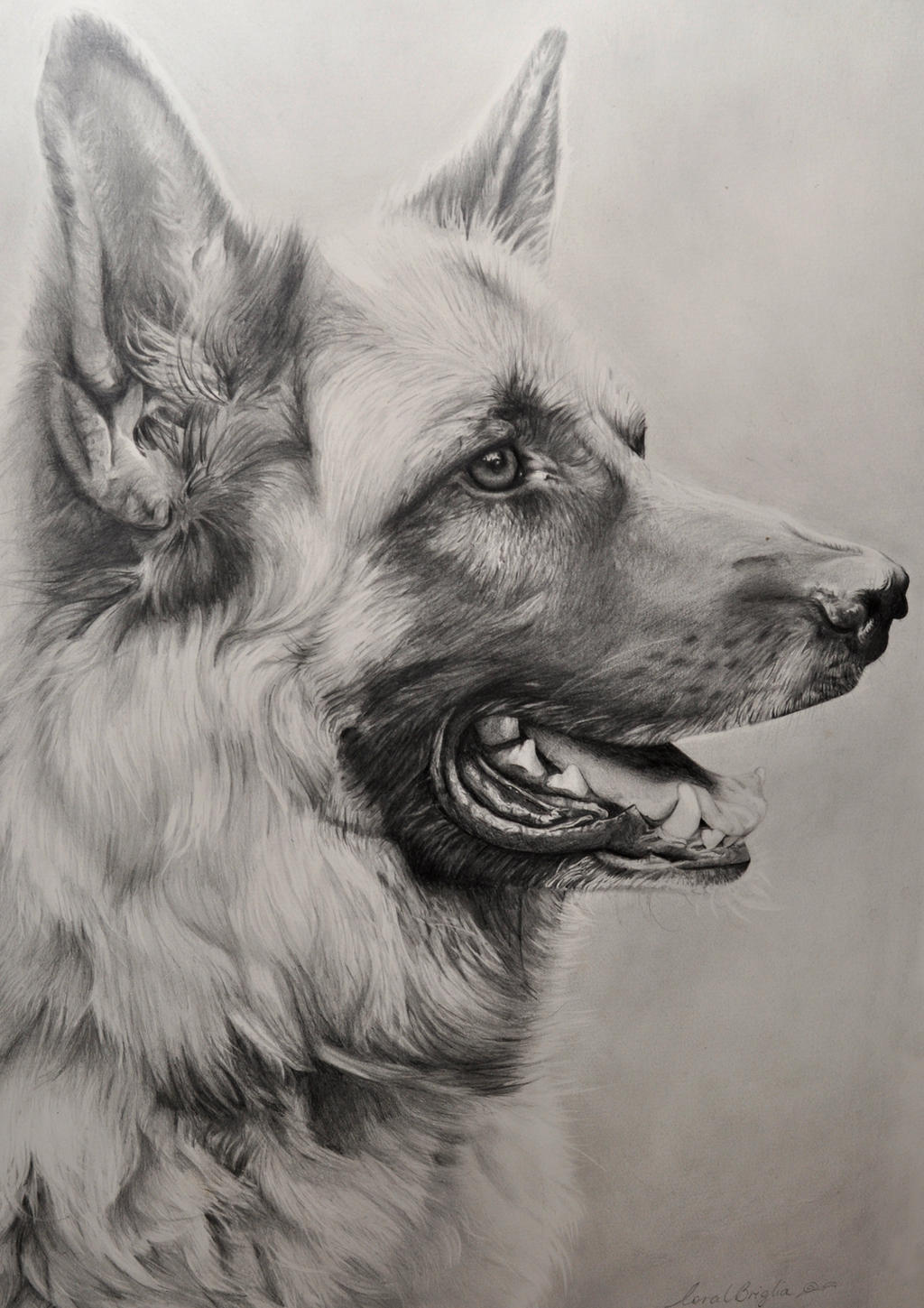 German Shepherd Drawing by Correlation on DeviantArt