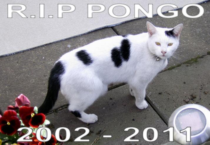 R.I.P Pongo by manicsfan