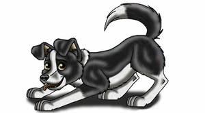 Border Collie pup.