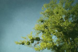 look up by denya-ukr