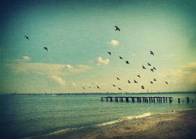 fly to the sea by denya-ukr
