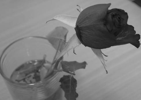 Death of Beauty