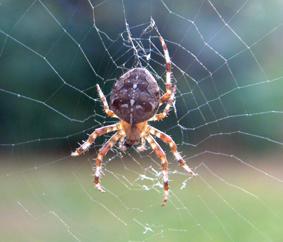 Legless Spider