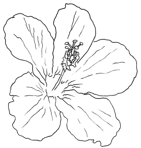 The gallery for --> Hibiscus Flower Outline