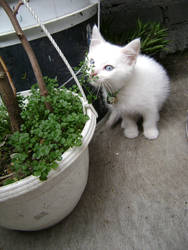 Gato con yerba mala.
