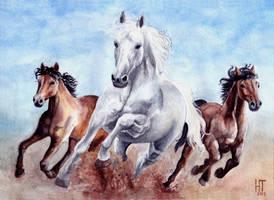 running horses by zarielcharoitite