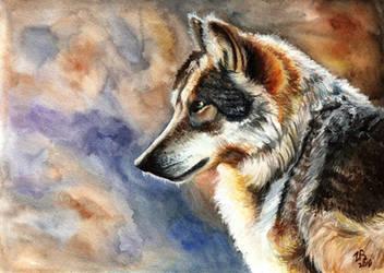 Wolf by zarielcharoitite
