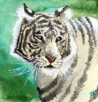 white tiger by zarielcharoitite