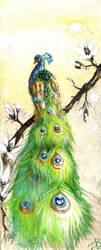 peacock by zarielcharoitite