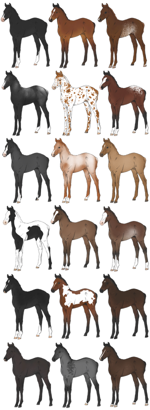 Lineage arab and PBA foals D2A 15/18