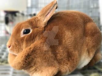 Chinese Zodiac: Year of the Rabbit 2