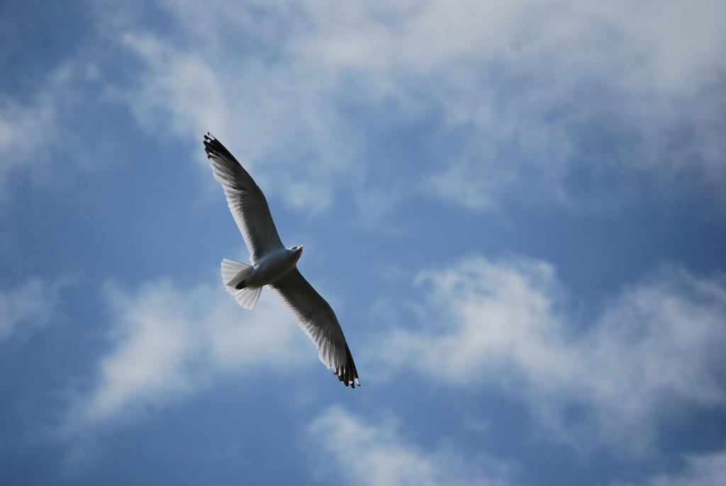 Seagull.. by alain-angela