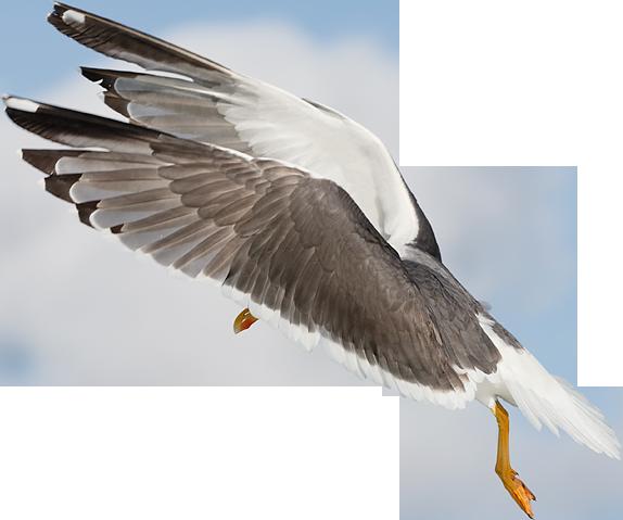 Seagull1 by alain-angela